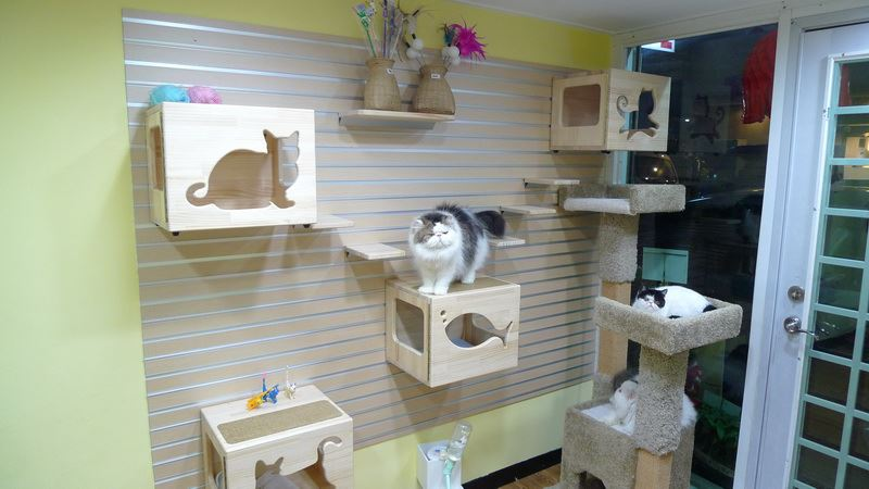 Cat-Climbing-Wall-9