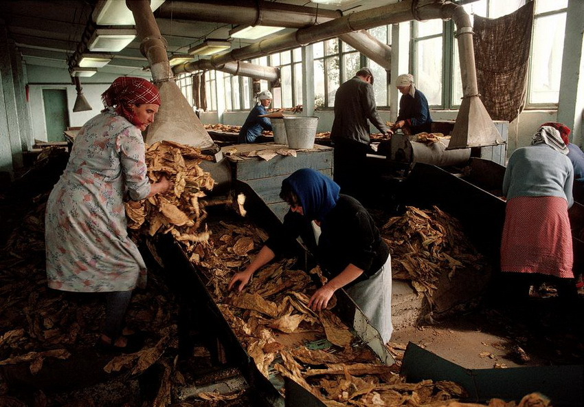 "MOLDAVIA. Kounicha village (""Old Believers""). A tobacco factory which processes one of the Moldavia's largest crops. 1988."