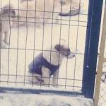 Помочь собачьему приюту: полное руководство