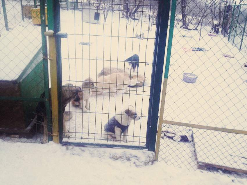 dogs-shelter-6-locals