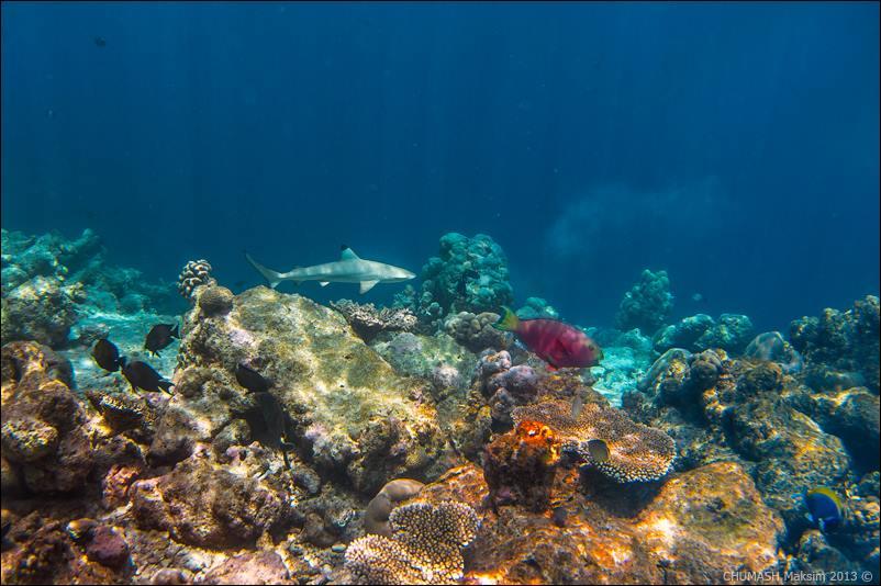 maldivs-maxim-chumash-08