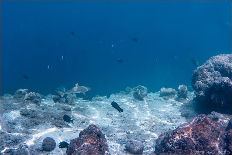 maldivs-maxim-chumash-09