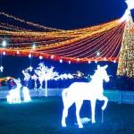 В молдавских селах устанавливают новогодние елки