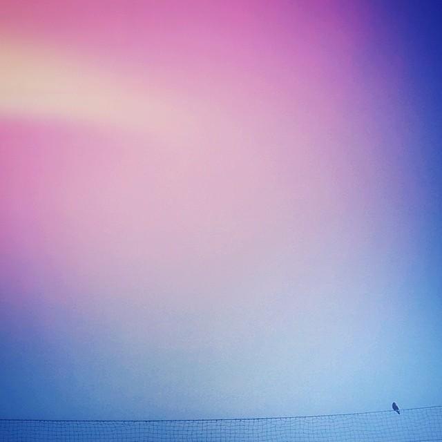 iris_cretu