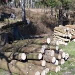 Официальные власти о вырубке деревьев в Рышкановском парке