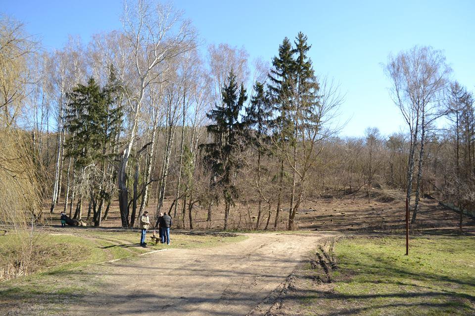 ryscanovka-les2