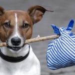 Приюти четвероного друга: В Кишиневе создали сайт, объединяющий животных из всех приютов