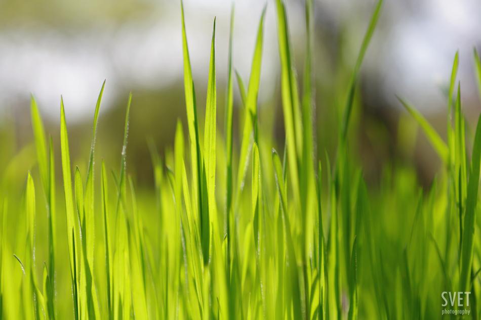 spring_inspiration_01