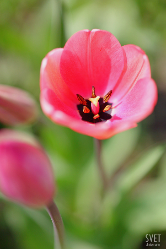 spring_inspiration_011