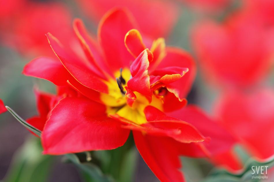 spring_inspiration_015