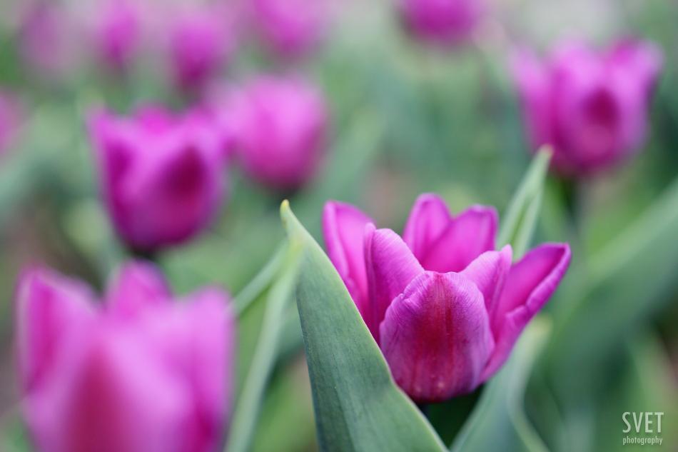 spring_inspiration_016