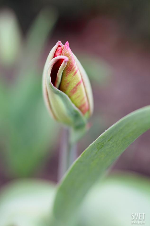 spring_inspiration_020