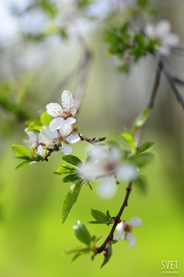 spring_inspiration_04