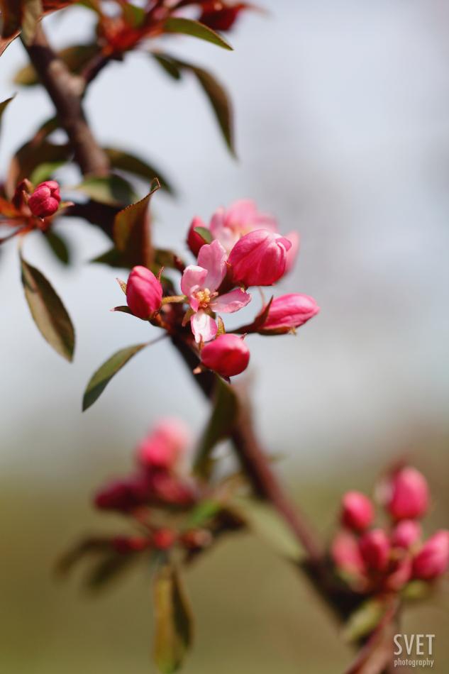 spring_inspiration_06