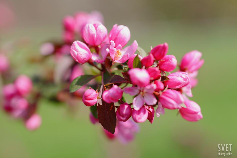 spring_inspiration_07