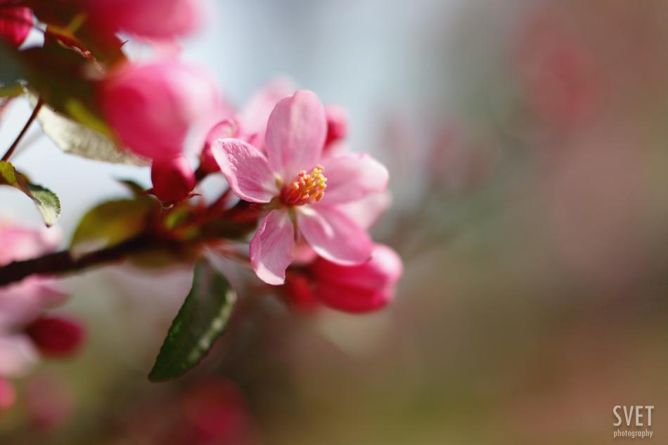 spring_inspiration_09