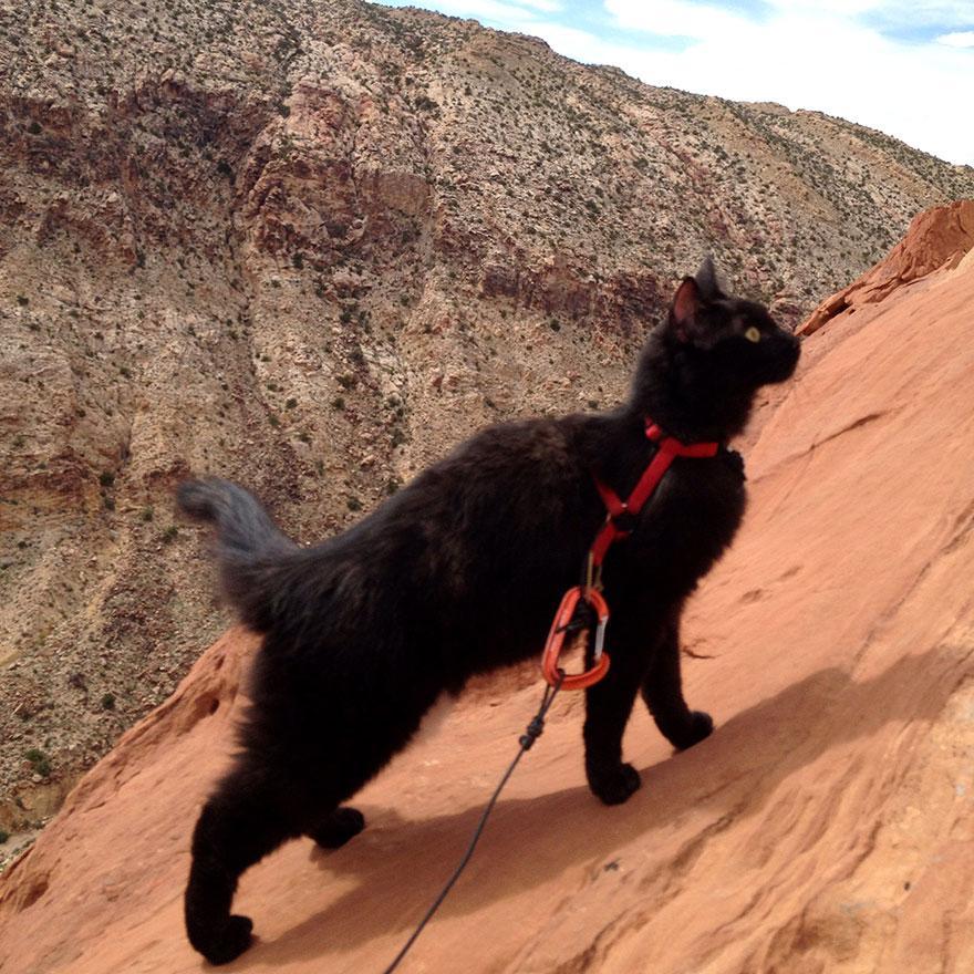 millie-climbing-cat-craig-armstrong-14