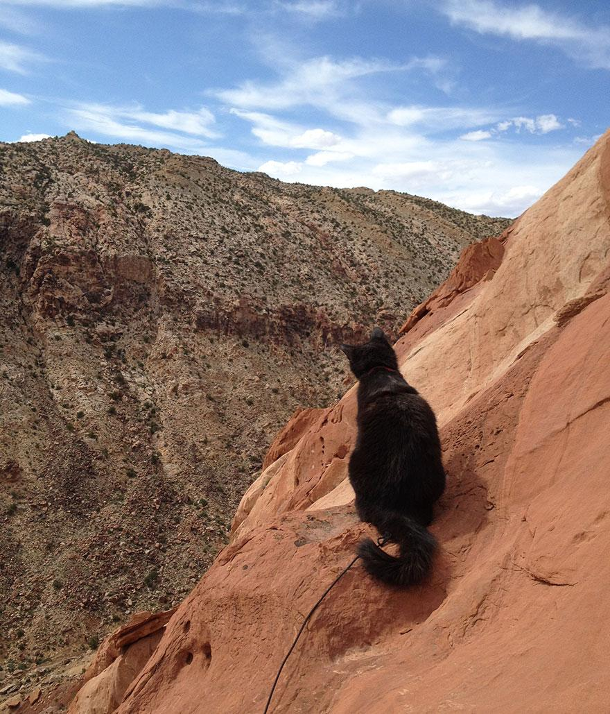 millie-climbing-cat-craig-armstrong-20