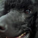 Фото: Международная выставка собак в Кишинёве
