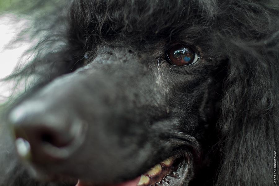Dog_Show_01_4825_web