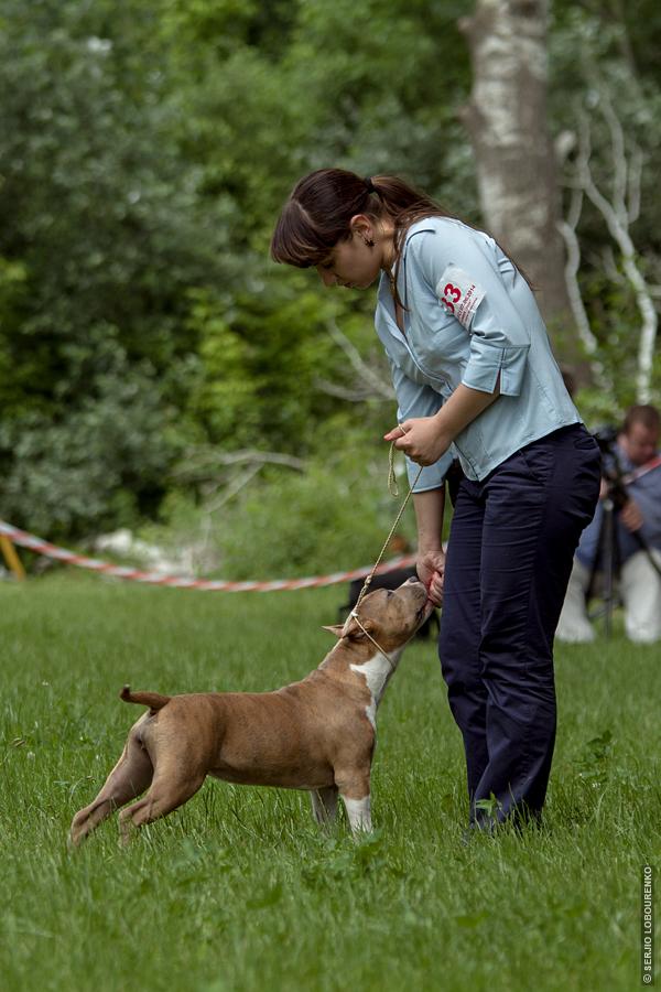 Dog_Show_05_4829_web