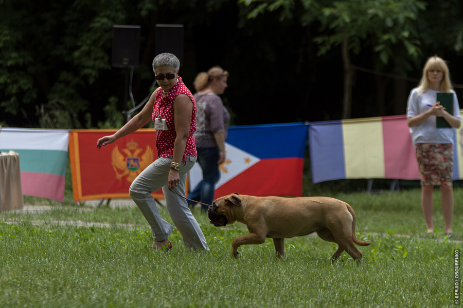 Dog_Show_06_4834_web