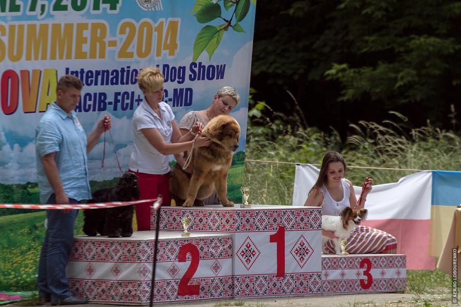 Dog_Show_08_4847_web
