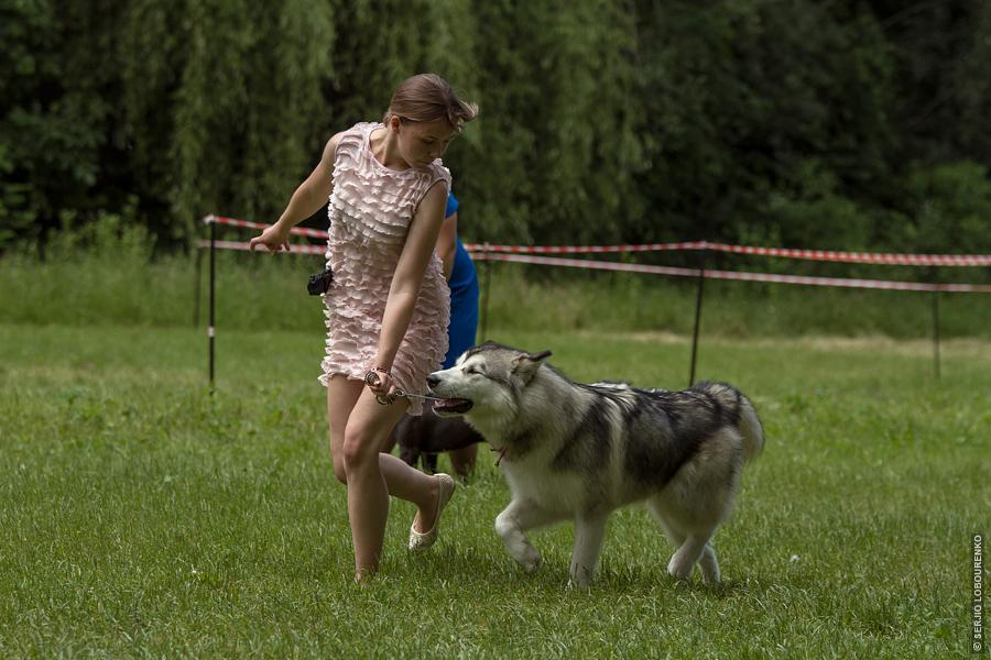 Dog_Show_11_4856_web