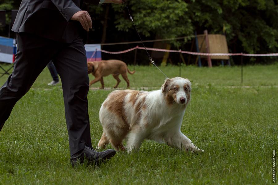 Dog_Show_17_4881_web