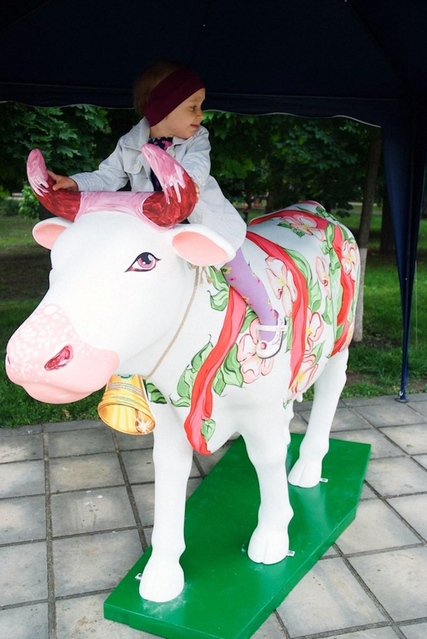 cows 11locals