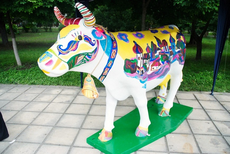cows 14locals