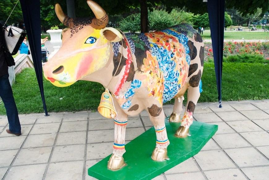 cows 17locals