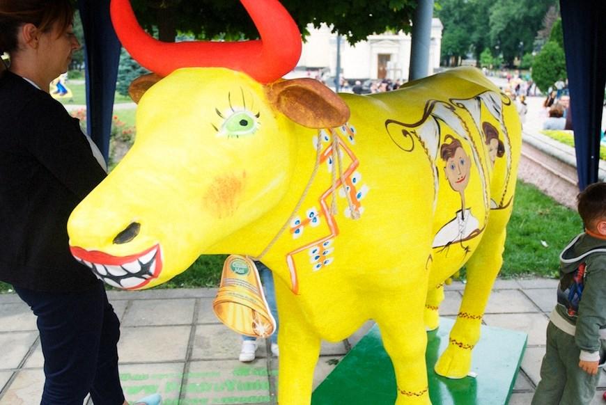 cows 21locals