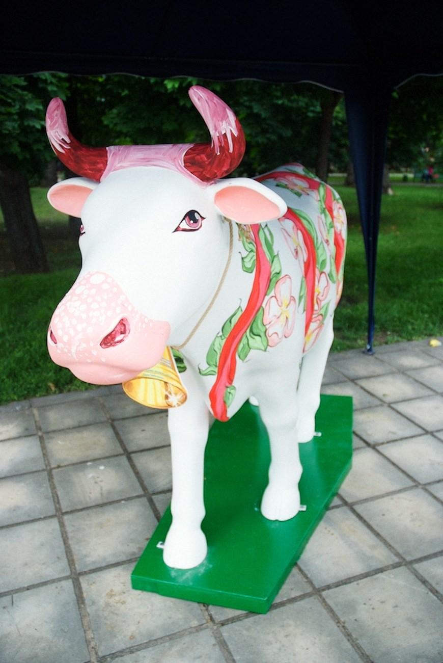 cows 2locals