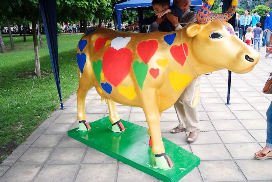 cows 32locals