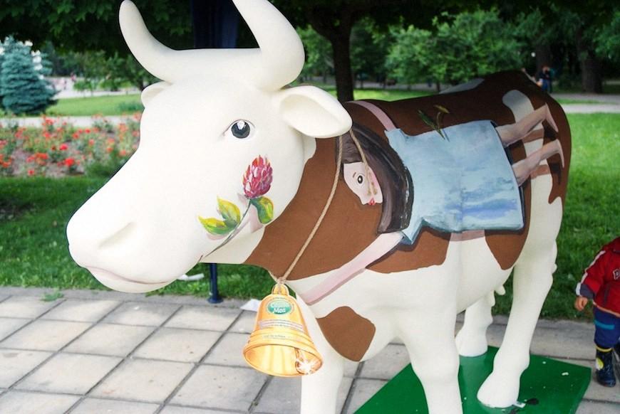 cows 33locals