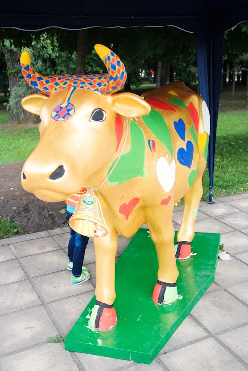 cows 34locals