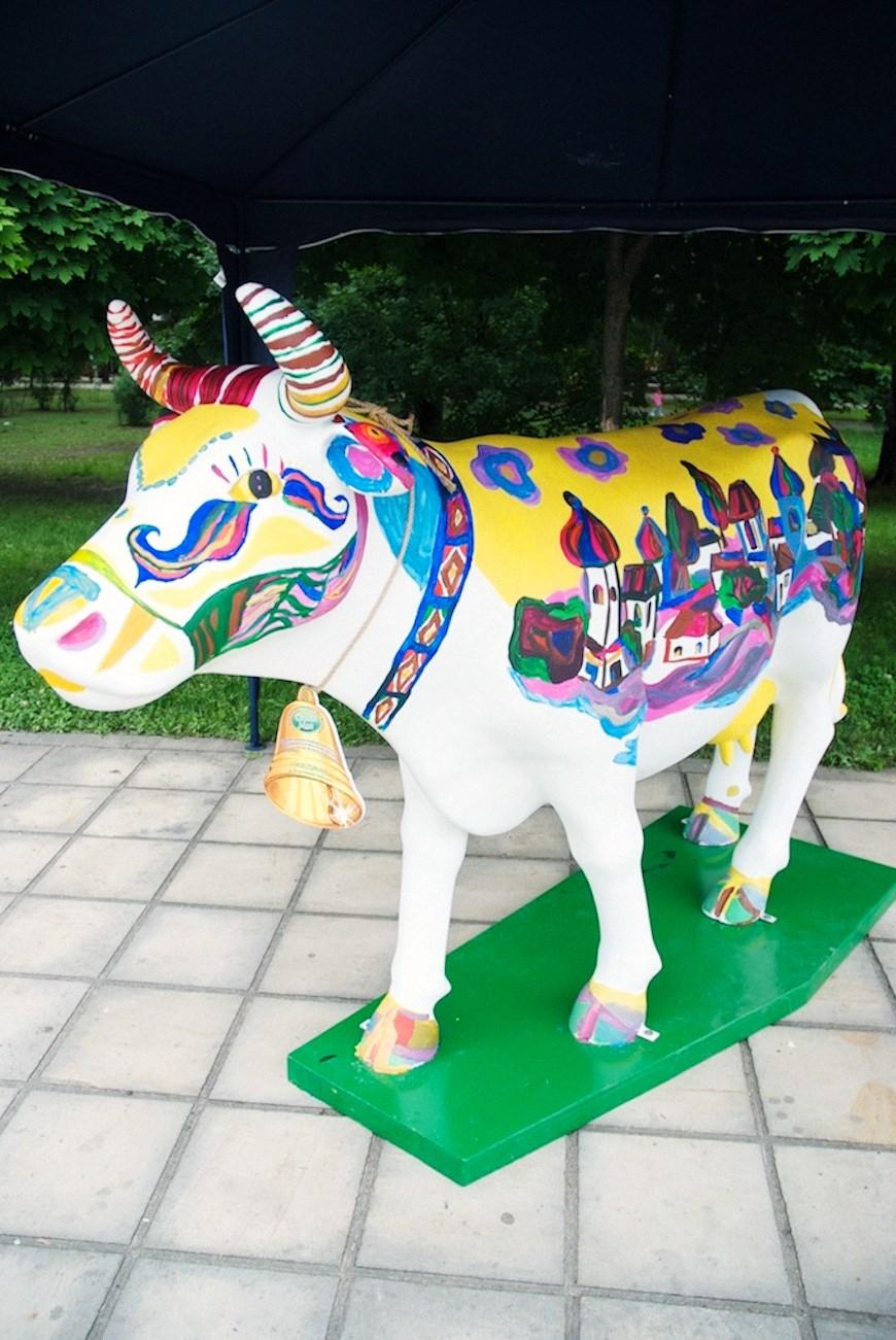 cows 9locals