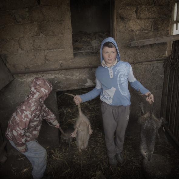 Иосиф и Вениамин держат грызунов в молдавском селе Кетросу. Их отец живёт и работает в Москве. Фото Asa Sjöström