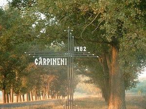 carpineni