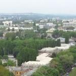 В октябре в столице посадят 25 тысяч деревьев