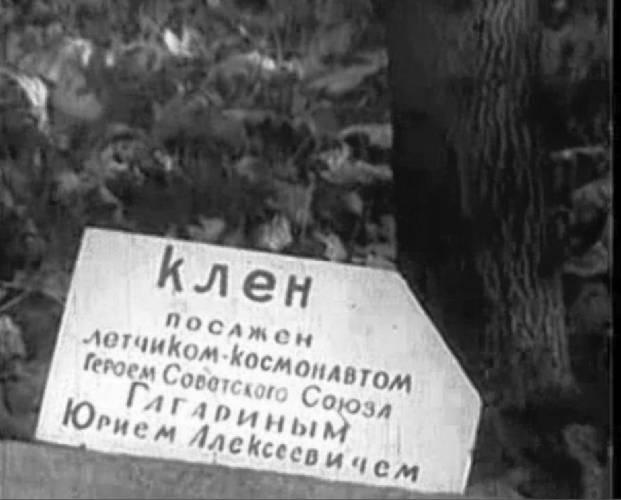 Клён, посаженный Гагариным Ю. А. в 1966 году.