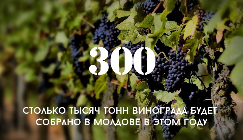 Bankfoboev.Ru_chernyi_vinograd copy