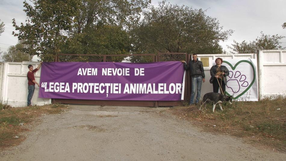 """""""Некрополь"""" – ужасное место, куда привозят всех отловленных собак с кишинёвских улиц и умерщвляют железным ломом. Вопреки заявлениям властей, никакой «гуманной» эвтаназии бездомным животным здесь никогда не проводили."""