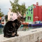 Фотопутешествие школы Романа Рыбалёва по Венеции: День 7. Острова Бурано и Мурано