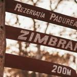 """В """"Pădurea Domnească"""" для спасения деревьев необходимо устроить затопление"""