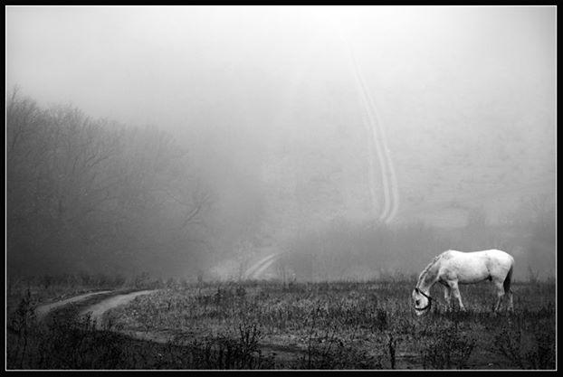 sergey-barancean-fog-02
