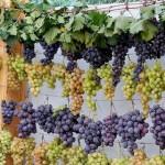 Молдова вошла в TOP-4 самых интересных винодельческих регионов мира