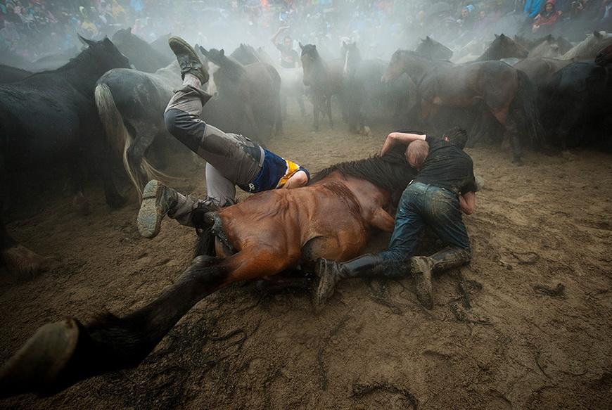 Испанский фестиваль Rapa das bestas. Укротители-агаррадоры должны голыми руками схватить дикого коня, остричь ему гриву и поставить клеймо. После завершения соревнований животных отпускают на свободу. 5 июля, деревня Сабучедо (Испания). Фото: Miguel Riopa / AFP