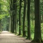 Более 270 деревьев будет вырублено в столице